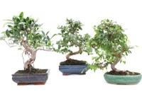 Caminada i visita als bonsais del Curro
