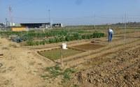 HORTS SOCIALS ALCARRÀS - T'agradaria cultivar un hort?