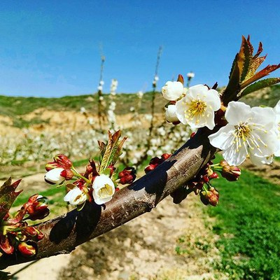 Alcarràs posa en valor els camps florits del terme amb dues rutes turístiques i un concurs de fotografia a Instagram
