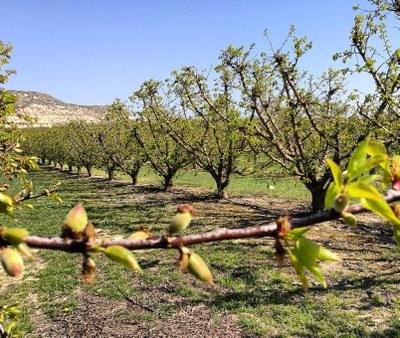 Els municipis de la fruita dolça i les organitzacions agràries es reuneixen amb el representant de la Comissió Europea a Barcelona per exigir solucions pel sector