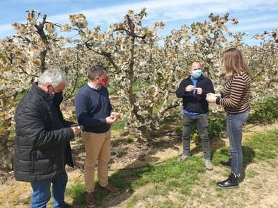 L'Ajuntament d'Alcarràs sol·licita ajuts i bonificacions pels pagesos afectats per les gelades del març