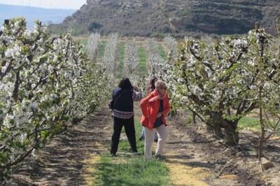 La ruta de patrimoni 'Alcarràs Florit' s'amplia a dos dies en la seva cinquena edició